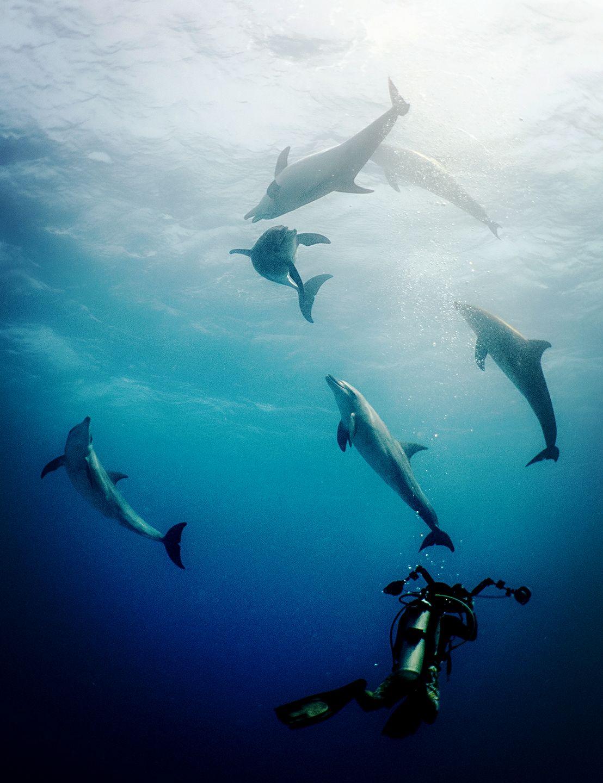 紅海 可愛 海豚 在嬉戲