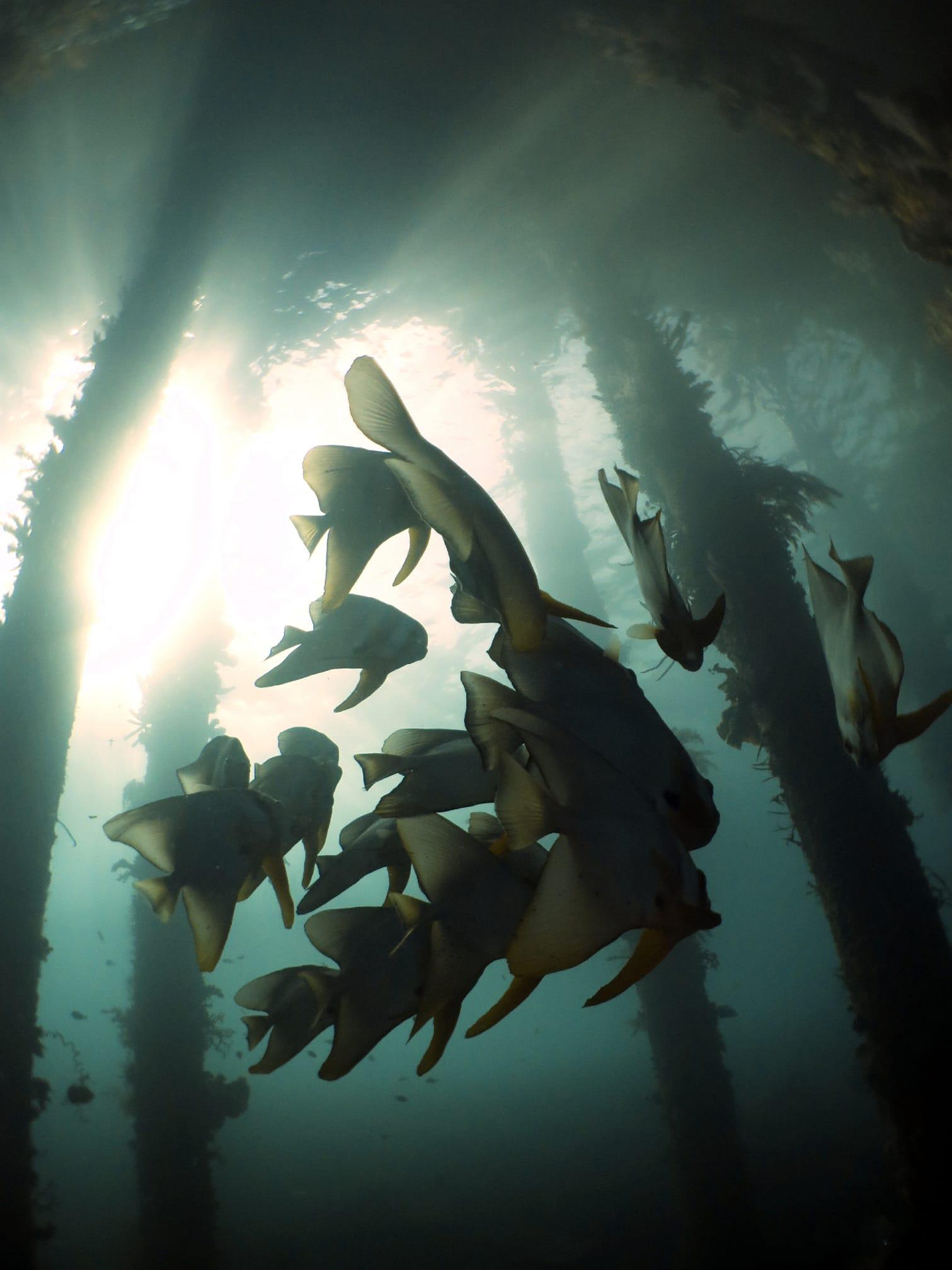 印尼 四王群島 碼頭下的 魚群